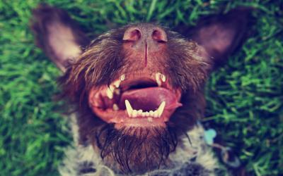 RediHeal Dental – For Dentals That Will Make You Smile