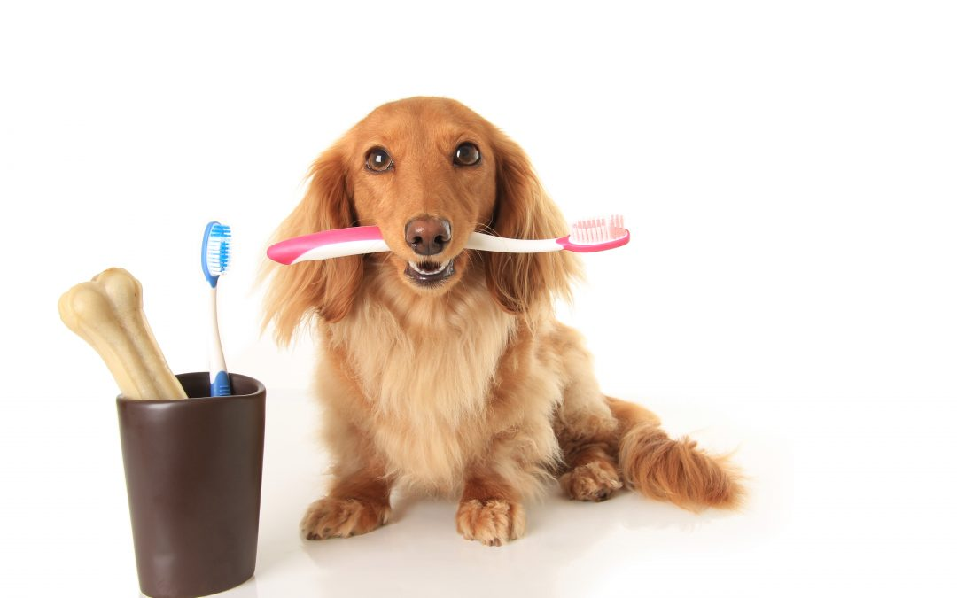Pet Dental Health Month is coming. Help them keep their bite!