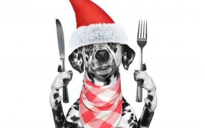 5 Holiday Foods on Your Pet's Naughty List