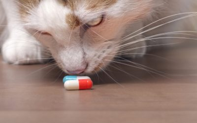 An ounce of pet poison prevention…